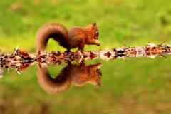 Plora Wood - Woodland Trust