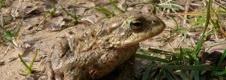 toads cauldshiels angela hunter crop.jpg