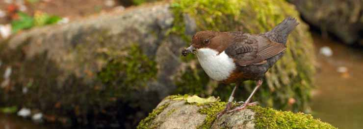 Dippers-D14651 crop.jpg